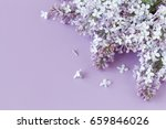 Floral Background Lilac Flowers ...