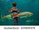 boy admiring fish in aquarium | Shutterstock . vector #659849374