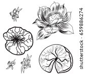 hand drawn lotus and peach... | Shutterstock .eps vector #659886274
