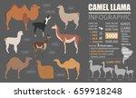 camel  llama  guanaco  alpaca ... | Shutterstock .eps vector #659918248