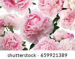 peony pink flowers on white... | Shutterstock . vector #659921389