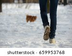 walk with spitz | Shutterstock . vector #659953768