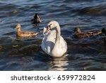 Swan Pose Ducks. Swan And Duck...