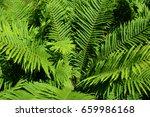 a fern is a member of a group... | Shutterstock . vector #659986168