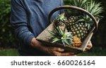 hands holding pineapple organic ... | Shutterstock . vector #660026164