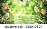 pink roses with leaves  shallow ... | Shutterstock . vector #660040804