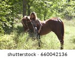 a young woman and a brown horse ... | Shutterstock . vector #660042136