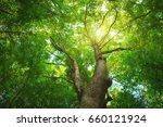 into the forest. nature... | Shutterstock . vector #660121924