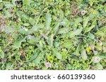 weeds parasites pests ... | Shutterstock . vector #660139360