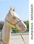 Small photo of White albino horse