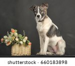 white and gray mongrel dog with ...   Shutterstock . vector #660183898