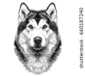 Dog Breed Alaskan Malamute Hea...