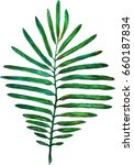 watercolor picture of a fern | Shutterstock . vector #660187834