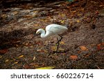 Small photo of Snowy egret is a North American egret with all-white plumage, black legs, and yellow feet