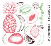hand drawn exotic fruits.... | Shutterstock . vector #660265723