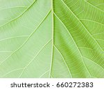 green leaf background  natural... | Shutterstock . vector #660272383