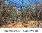 Small photo of Tree acclimatization plantation