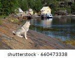 north of russia coast of white...   Shutterstock . vector #660473338