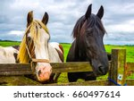 Black And Piebald Horses At...