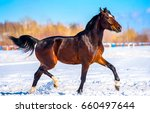 Stock photo chestnut horse walking on snow field side view 660497644