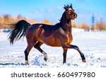 chestnut horse dancing on snow... | Shutterstock . vector #660497980