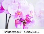 beautiful fresh flowers  pink... | Shutterstock . vector #660528313