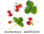 fresh and ripe strawberries... | Shutterstock . vector #660552214