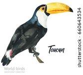 watercolor bird of isolated... | Shutterstock . vector #660643534