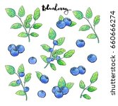 hand drawn painted set of... | Shutterstock . vector #660666274