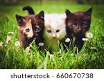 Stock photo cats on grass flower field background 660670738
