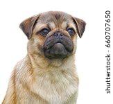 drawing dog breed pug portrait... | Shutterstock . vector #660707650