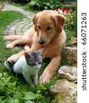 Best Friends. Domestic Cat And...
