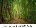 the way to the deep forest | Shutterstock . vector #660726694