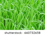 green grass with early morning...   Shutterstock . vector #660732658