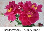 peony rose red flower close up   Shutterstock . vector #660773020
