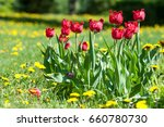 spring landscape with flowers.  ... | Shutterstock . vector #660780730