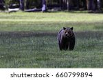 grizzly bear sow in grassy... | Shutterstock . vector #660799894