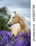 Stock photo vertical portrait of a beautiful palomino horse 660805789