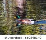 duck bird in lake pond | Shutterstock . vector #660848140