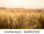 smell of the summer  close up... | Shutterstock . vector #660852520