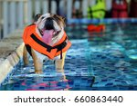 english bulldog  dog wear life... | Shutterstock . vector #660863440