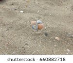 four seashells on a beach | Shutterstock . vector #660882718