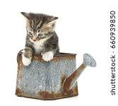 Little Kitten Inside A Rusty...