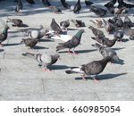 Grey Pigeons Standing On A...