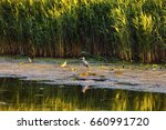 landscape with different birds... | Shutterstock . vector #660991720
