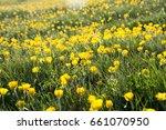 mountain meadow | Shutterstock . vector #661070950