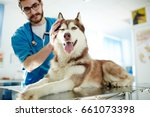 Stock photo veterinarian cuddling husky dog in clinics 661073398