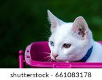 white cat with blue eyes select ... | Shutterstock . vector #661083178