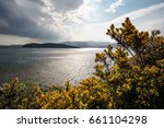 Yellow Gorse In Front Of Lake...