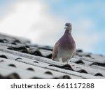 Blurred Pigeon On Roofs  Pigeo...
